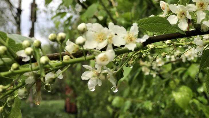 Жителей Брянской области 4 мая огорчит дождливая погода