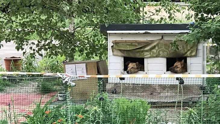 В Брянске открыли первую собачью общагу с цветочками
