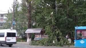 В Брянске на остановку рухнула огромная ветка дерева
