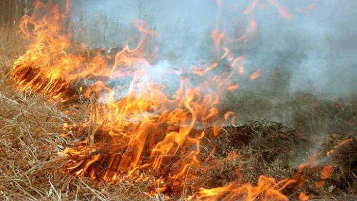 В Фокинском районе Брянска спасатели более часа тушили горевшую траву