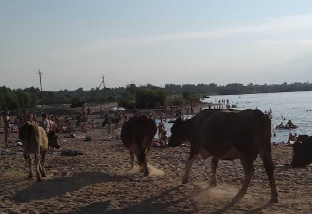 Снимки роскошных брянских телок на пляже взбудоражили соцсети