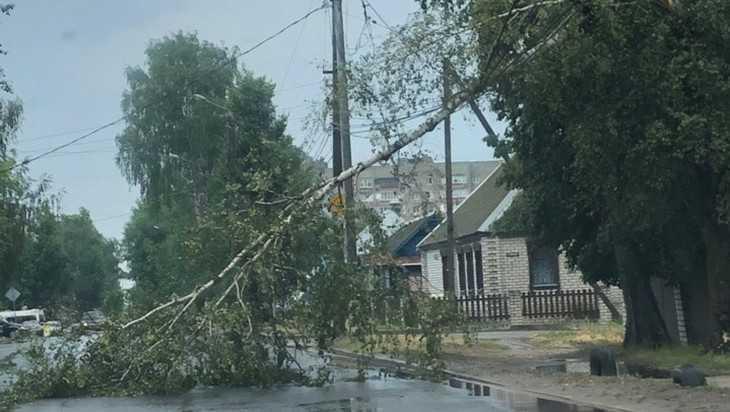 В Брянске на проспекте Московском рухнуло огромное дерево