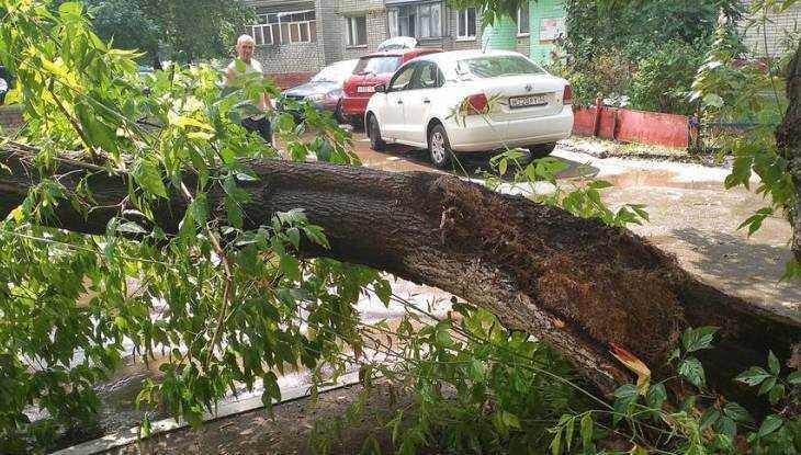В Брянске ливень повалил 12 деревьев и повредил автомобиль