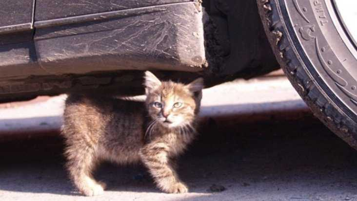 В Брянске водитель иномарки задавил кошку и скрылся