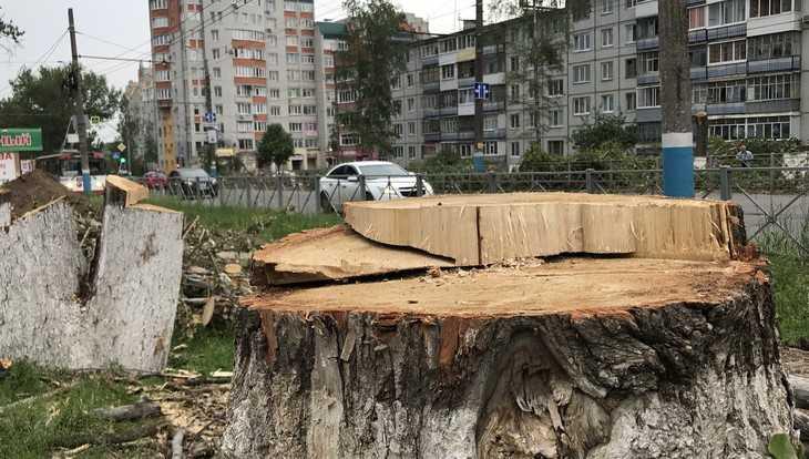 Тополя на улице Авиационной в Брянске срубили по закону