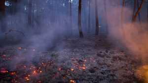 В трех брянских районах загорелись леса