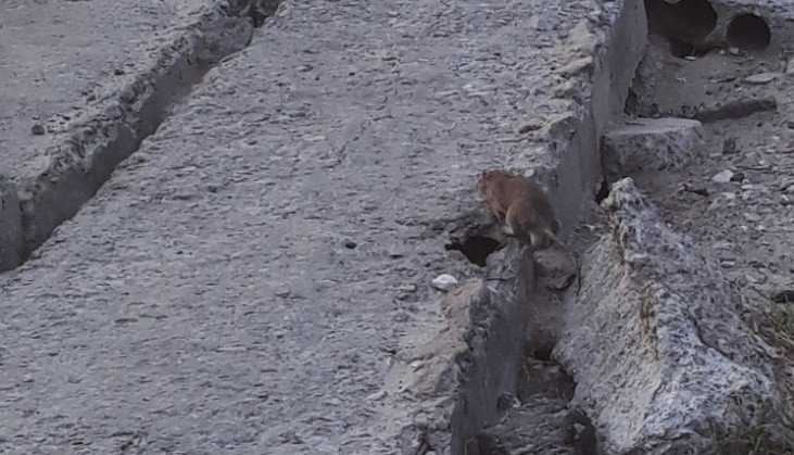 В Брянске сняли на видео нашествие крыс во дворе на улице Пушкина