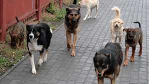 На приют для бездомных животных Брянску выделили почти 25 млн рублей