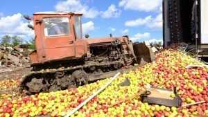 Брянский сенатор призвал отдать непроданные продукты малоимущим