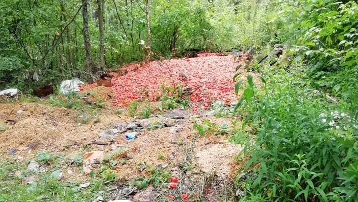 Под Брянском нашли гору выброшенных помидоров