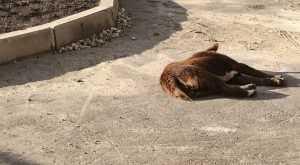 В Брянске автомобилист раздавил собаку и скрылся