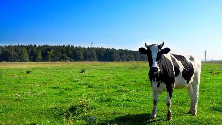 В Брянской области запретили пасти скот вдоль государственной границы
