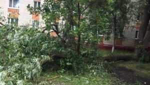 В Брянске на улице Володарского от порыва ветра рухнуло дерево
