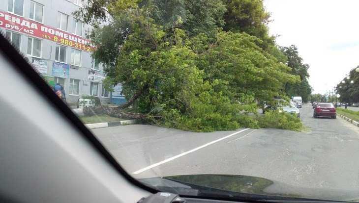 В Дятькове поваленное ветром дерево рухнуло на дорогу