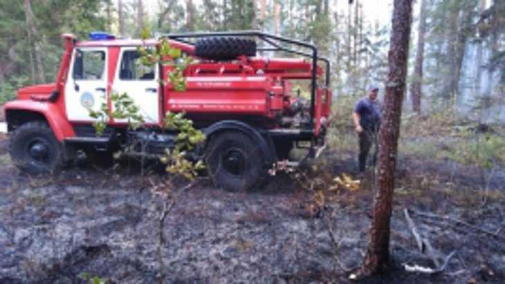 Под Брянском произошел лесной пожар