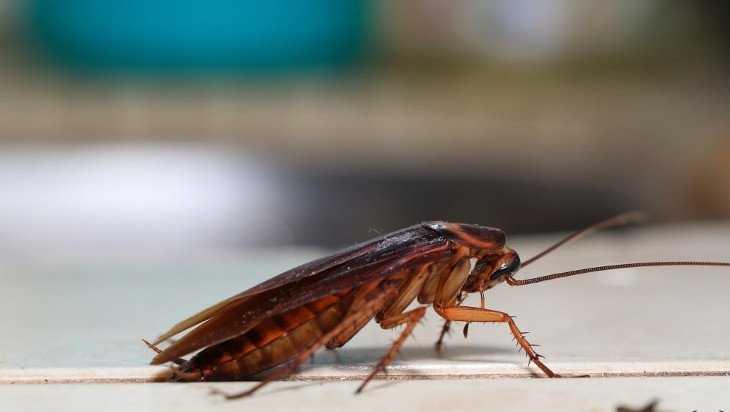 В Клинцах тараканы погубили детсад «Золотая рыбка»