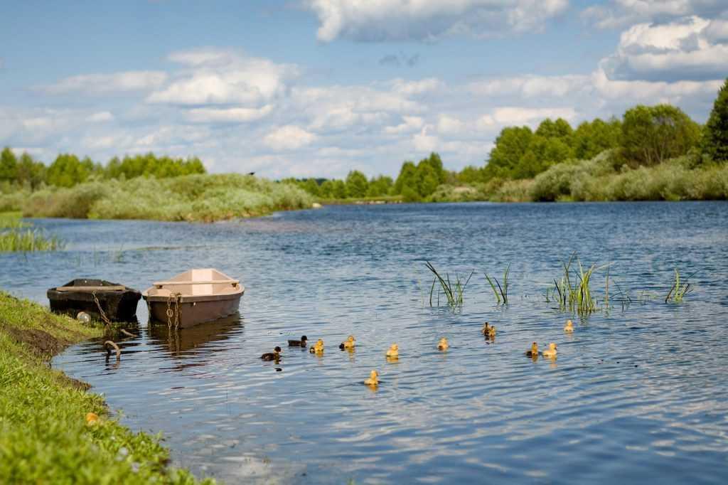 Брянской области 8 июня пообещали грозы и 31-градусную жару
