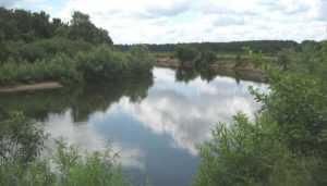 Жителям Брянской области запретили купаться в реке Десне