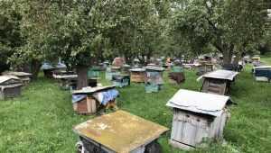 В Брянской области зафиксировали массовую гибель пчел