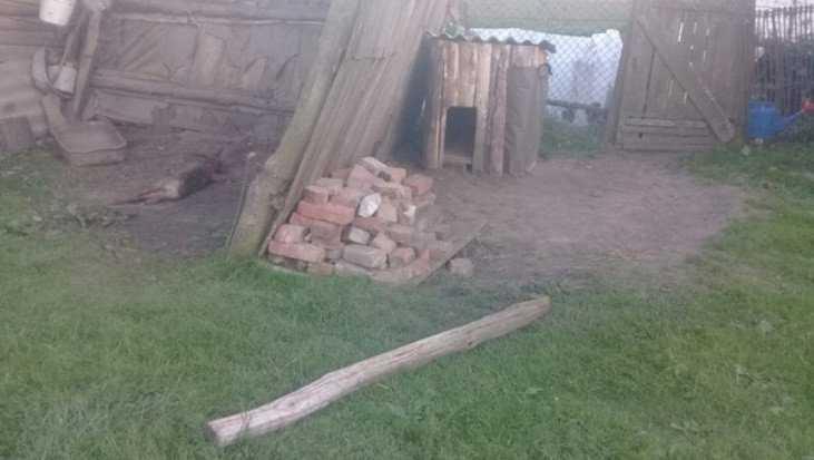 В брянской деревне живодёры зверски казнили собаку 84-летней бабушки