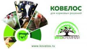 Брянское предприятие ООО «Экокремний» представило продукцию на международной выставке