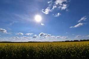 Брянскую область днём 11 июня накроет 31-градусная жара