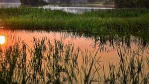 В унечском озере утонул 40-летний мужчина