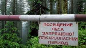 В брянских лесах власти ввели противопожарный режим