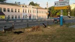В Брянске территорию у автовокзала захватили бродячие псы