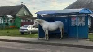 В Брянске сняли зашедшую под крышу остановки грустную лошадь