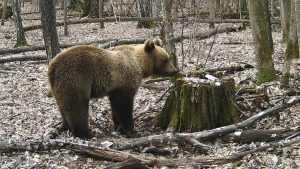 В фотоловушку «Брянского леса» попали почти все обитатели заповедника