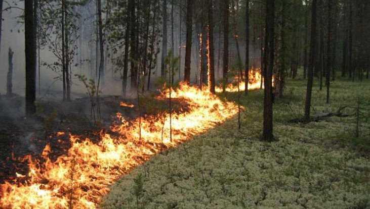 Под Брянском 9 огнеборцев более часа тушили лесной пожар