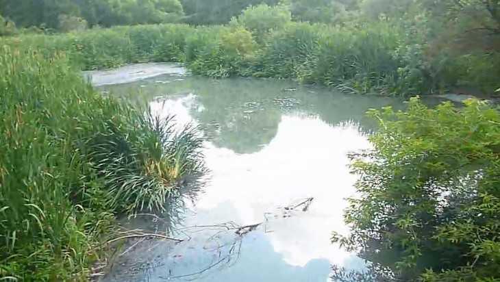Брянские моряки сняли трагическое видео о том, как убивают реку