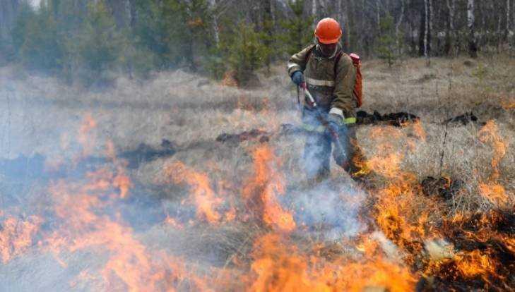 В Брянском районе девять спасателей сразились с лесным пожаром