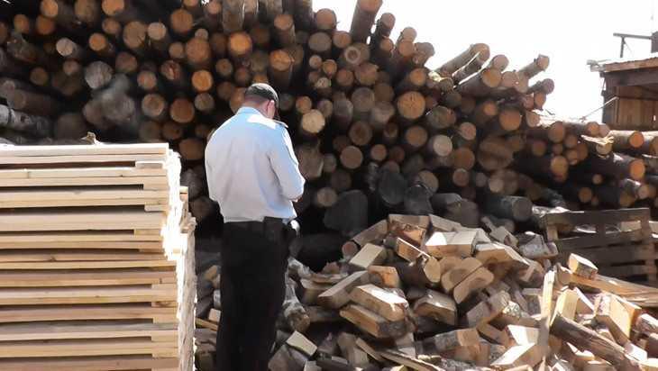 В Жуковке «черными лесорубами» оказались сотрудники лесхоза