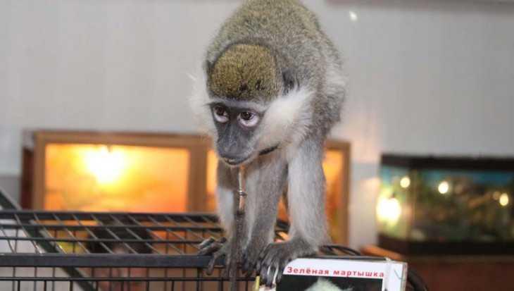 Жители Брянска рассказали о бедственном положении животных на выставке