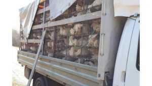 В Брянской области задержали «кудахтавший» грузовик из Белоруссии