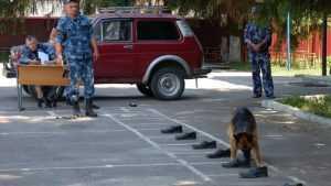 В Брянском УФСИН прошли соревнования со служебными собаками