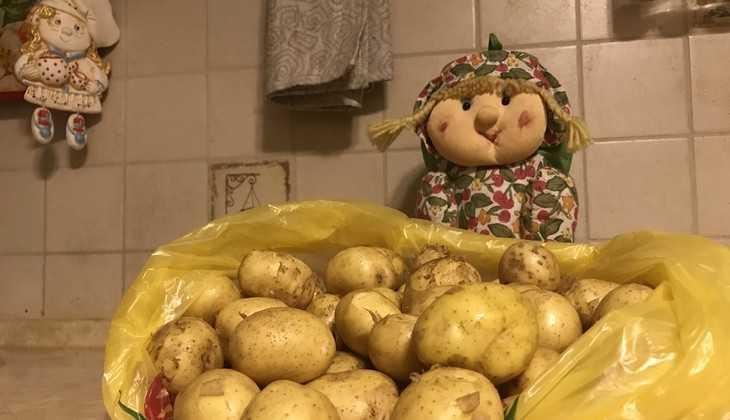В Брянске ростовская молодая картошка оказалась вдвое дешевле местной