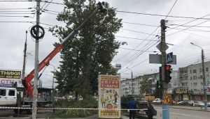 В Брянске на Авиационной улице спилили последние деревья