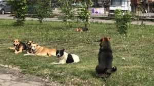 В Брянске перед покупателями «Линии» выстроили собачий кордон