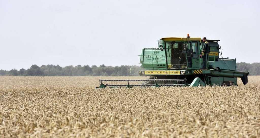 В Брянской области приступили к уборке зерновых