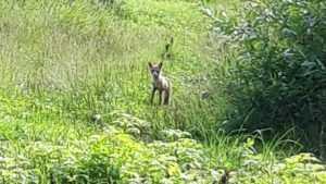 В Брянске возле станции мать с ребёнком напугала лиса