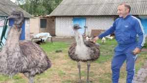 В Погарском районе беженцы с Донбасса начали разводить страусов