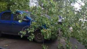 В Брянске во дворе дома дерево рухнуло на автомобиль