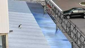 В Брянске на крышу магазина «Магнит» посадили унылого кота на привязи