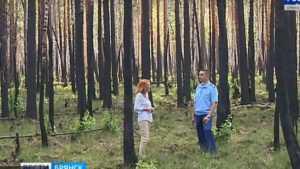 Брянские лесники скрыли масштабы крупных пожаров
