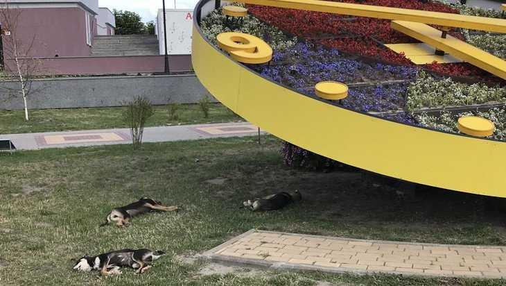 Брянским псам-мудрецам приглянулись цветочные часы на набережной