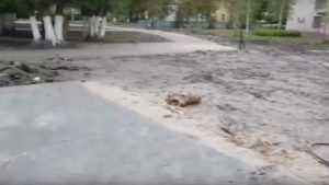 В Белых Берегах предложили благоустроить в парке «народную тропу»