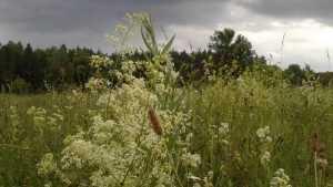 В Брянскую область 6 июля вернутся дожди с грозами